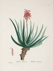 Figured is the stem, rosette of fleshy leaves and a red flower spike.  Plantarum Historia Succulentarum p.85, 1799-1837.