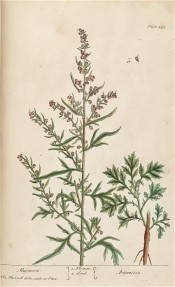 Shown are pinnatisect leaves and flower heads that are reddish in this lithograph.  Blackwell pl.431, 1839.