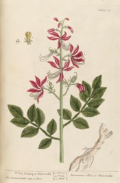 The picture shows a root and shoot with compound leaves and pink flowers.  Blackwell pl.75, 1737.