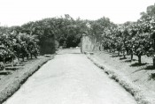 The photograph shows part of the Lower Garden with a straight path lined with persimmon trees.