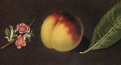 Figured is a round yellow and red peach with pink blossom and leaf. Pomona Britannica pl.36, 1812.