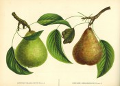 Figured are 2 pears with shoot and leaves, one green the other yellow and heavily russeted. Album de Pomologie pl.125, 1849.