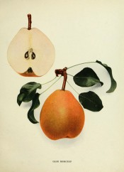 Figured is an oval pear, with sectioned pear, skin yellowish-green heavily speckled with russet. Pears of New York p.172, 1921.