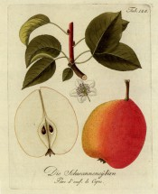 Figured are leaves and flower + red and yellow pear, globular in shape, tapering from the middle. Pomona Austriaca t.128, 1792.