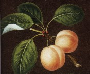 Figured are 2 oval, yellow plums with ovate, toothed leaves. Pomona Britannica pl.16, 1812.