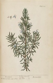 Depicted is a shoot of herb Rosemary with grey-green leaves and mauve flowers.  Blackwell pl.159, 1737.