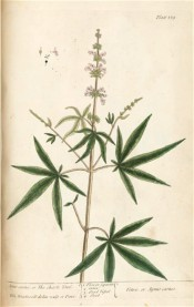 Figured are the palmate leaves and upright panicles of tiny lilac flowers.  Blackwell pl.139, 1737.