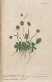 The whole plant is figured, roots, ovate leaves and single white flowers.  Blackwell pl.200, 1837.