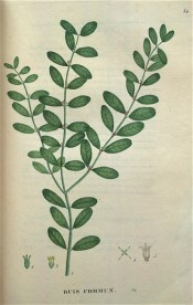 The image shows glossy, ovate to oblong leaves, notched at the tips.  Saint-Hilaire Tr. pl.34, 1825 .