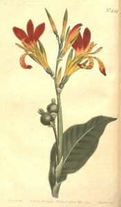 The image depicts flowering stem, leaves and seed pods, the flowers red and yellow.  Curtis's Botanical Magazine t.454, 1799.