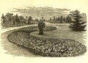 This black and white engraving shows a garden bed with hybrid clematis used as bedding plants.  Flore des Serres p.22, 1874.