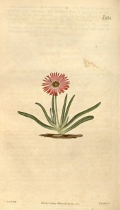 Figured is a succulent with fleshy bright green leaves and solitary crimson flowers.  Curtis's Botanical Magazine t.2144, 1820.