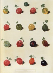 17 varieties of gooseberry are shown, round or oval in shape, green, red or yellow in colour. Pomona Britannica pl.6, 1812.
