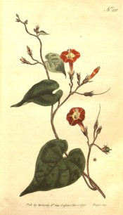 Illustrated are the heart-shaped leaves and yellow and orange-red flowers.  Curtis's Botanical Magazine t.221, 1793.