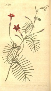 Shown are the feathery leaves and slender-tubed, scarlet flowers.  Curtis's Botanical Magazine t.244,1793.