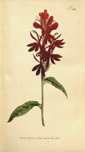 Figured are toothed leaves and raceme of tubular brilliant scarlet-red flowers.  Curtis's Botanical Magazine t.320, 1795.