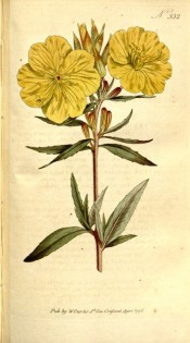 Figured are lance-shaped leaves and cup-shaped yellow flowers.  Curtis's Botanical Magazine t.332, 1796.