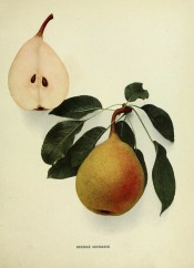 Shown is an oval pear and sectioned pear, skin yellowish-green, red-flushed, dotted with russet. Pears of New York p.138, 1921.