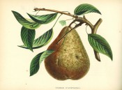 Figured is a fruiting shoot and large pyriform pear, with greenish skin heavily russeted. Album de Pomologie pl.109, 1849.