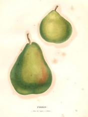Figured are 2 pears, one small, green and rounded, the other large, pyriform, green flushed red. Saint-Hilaire pl.89, 1828.