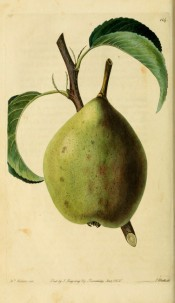 Figured is a large oblong pear with a green skin and patches of brown russet. Pomological Magazine t.114, 1830.