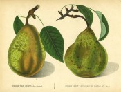 Figured are 2 pears with shoot and leaves, both green, pyriform with russet markings. Album de Pomologie pl.22, 1847.