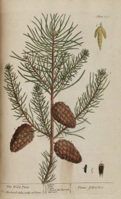 Illustrated are leaves, male cones and ripe female cones.  Blackwell p.190, 1737.