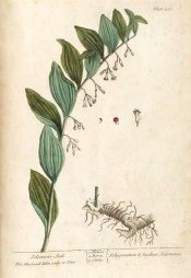 Figured are leaves and arching stem bearing from each lower leaf axil pendant, tubular white flowers.  Blackwell pl.251, 1739.