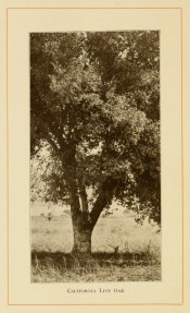 The photograph shows most of the tree, short trunk and somewhat upright branches.  American Forest Trees p.307, 1913.