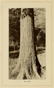 The photograph shows a thick, upright trunk in situ in open forest.  American Forest Trees p.300, 1913.